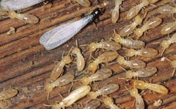 termite are vexing to say the least