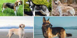 Top 10 Best Dog Breeds List