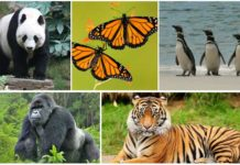 Rare Animals Extinction List with Different Species