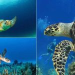 Facts-about-SeaTurtles