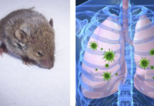 Hantavirus Outbreak Facts